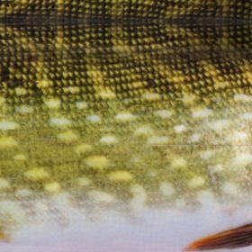 Real Life Pike 140 x 70mm, Small, 4-Pack